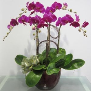 Potted Orchids For Tet 06