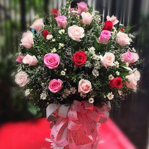 36 mixed red pink roses