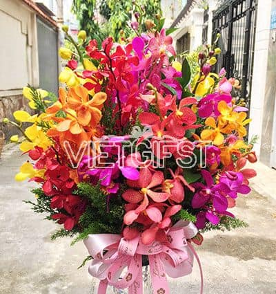 mixed orchids in vase