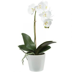 potted white orchid 01 branch