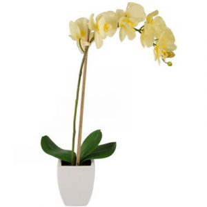 potted yellow orchid 01 branch