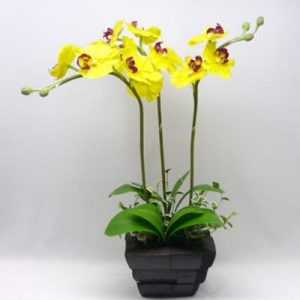 potted yellow orchid 03 branches