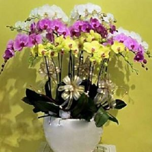 special potted orchids 02