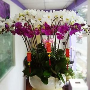 special potted orchids 03