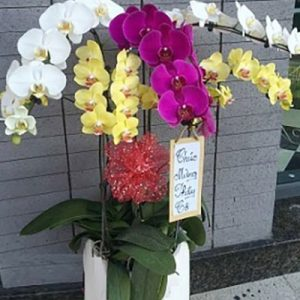 special potted orchids 05