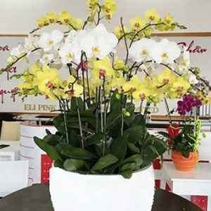 special potted orchids 07