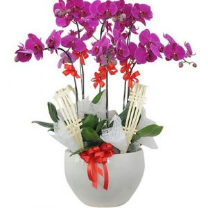 Women's Day Orchids Potted 07