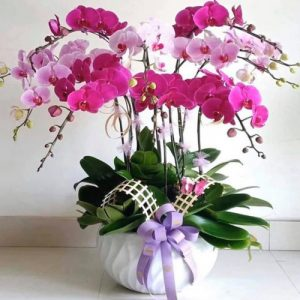 poted-orchids-for-tet-13