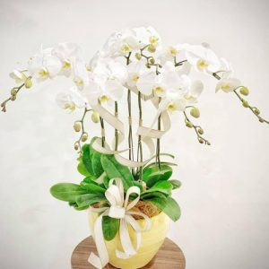 poted-orchids-for-tet-16