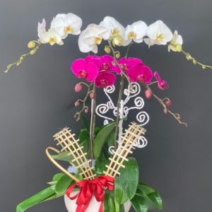 poted-orchids-for-tet-18