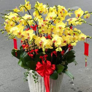 special-orchids-for-tet-04