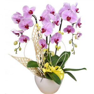 orchids-for-dad-11